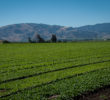 Salinas Valley Landscaping Salinas Valley Landscaping